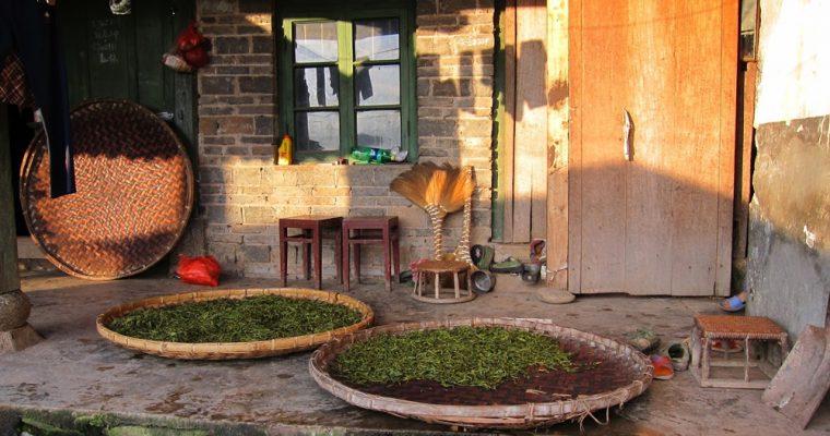 【世界のお茶】中国・お茶をめぐる旅:中国雲南省4~プーアル茶の旅後半